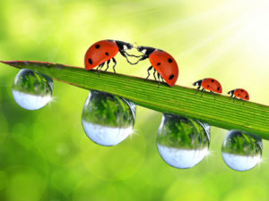 LADY BUGS MOBILE